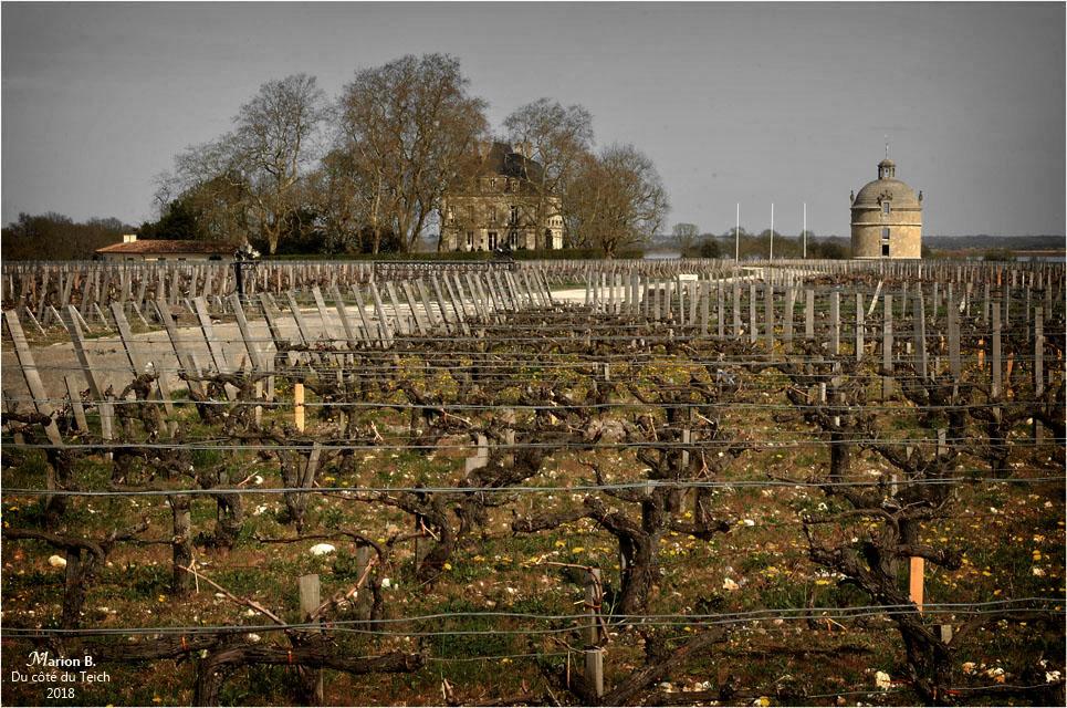 blog-dsc_43838-domaine-château-latour-5-avril-2018-nc.jpg