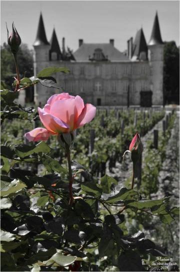 BLOG-DSC_46381-1-château Pichon Baron N&C2