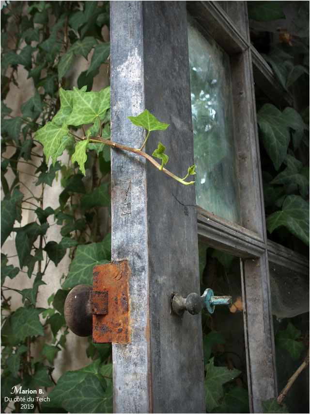 BLOG-P8262071-lierre et porte vitrée