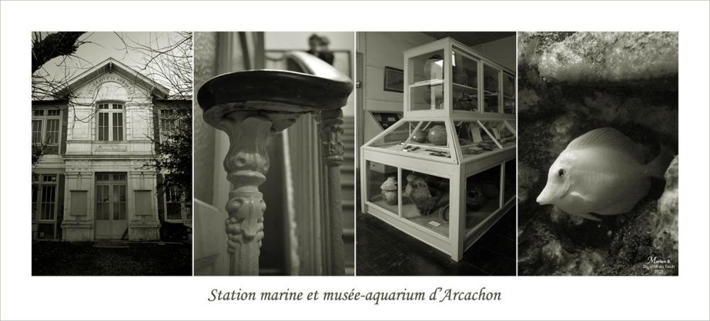 bannière station-marine musée-aquarium Arcachon