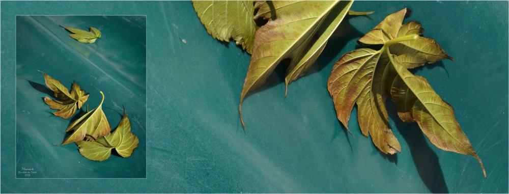 BLOG-DSC_47880-bannière feuilles mortes coque annexe verte