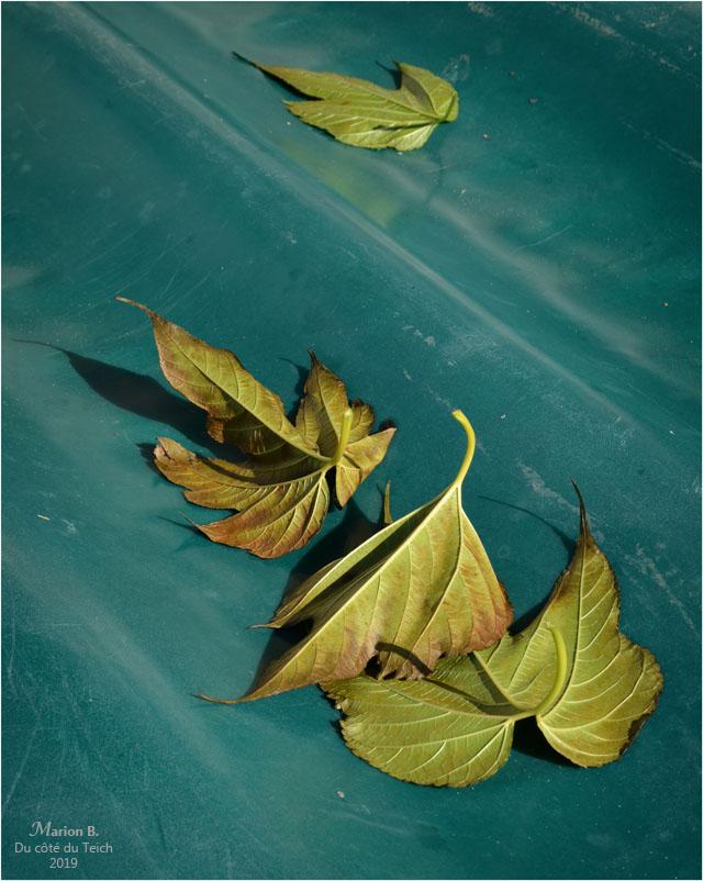 BLOG-DSC_47880-feuilles mortes coque annexe verte.jpg