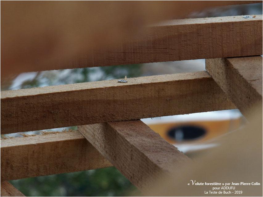 BLOG-PA022695-Volute forestière la Teste