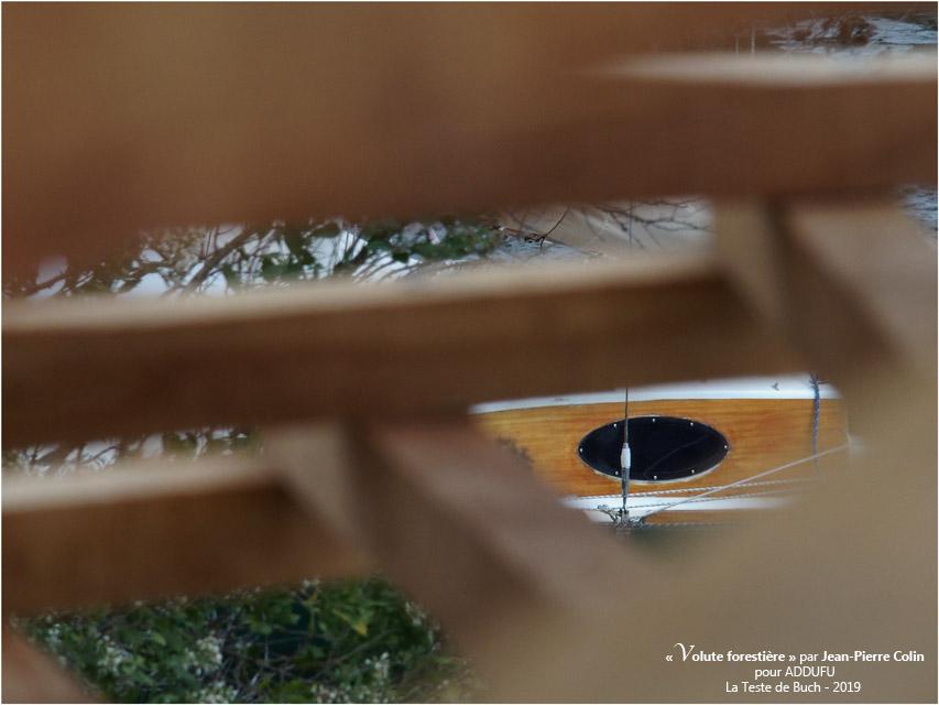 BLOG-PA022696-Volute forestière la Teste