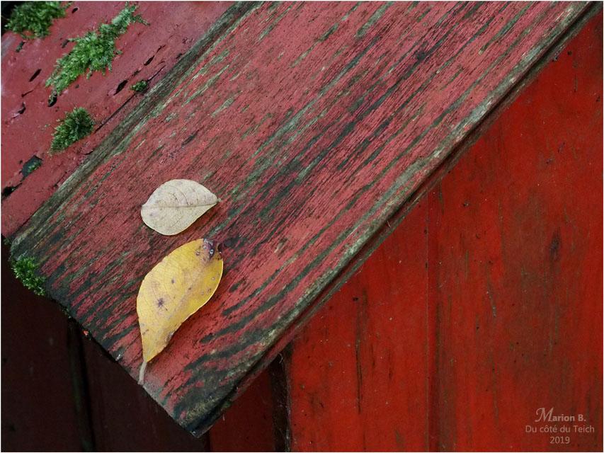 BLOG-PA233150-feuilles mousse appentis rouge