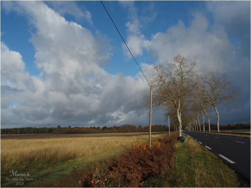 BLOG-PB293794-route landaise