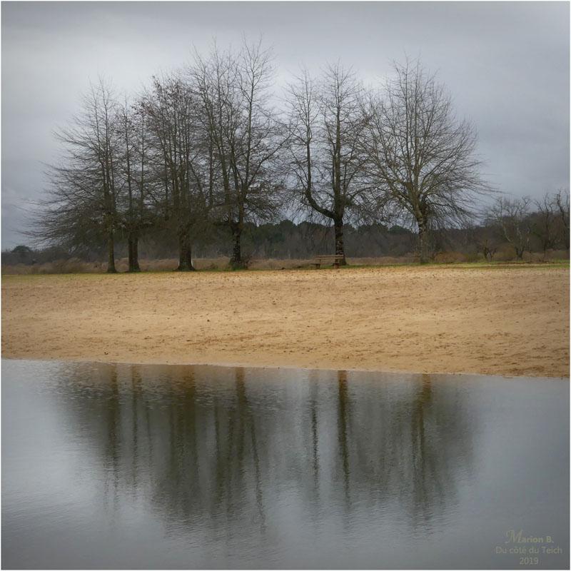 BLOG-P1000014-arbres étang le Teich