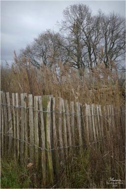 BLOG-P1000019-ganivelles roseaux et arbres nus