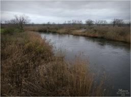 BLOG-P1000022-Eyre le Teich