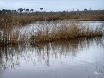 BLOG-P1000033-inondations plaines le Teich