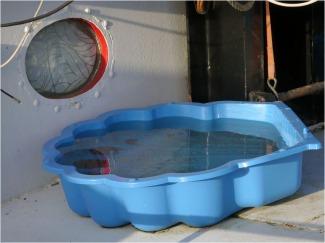 BLOG-P1000270-piscine bateau