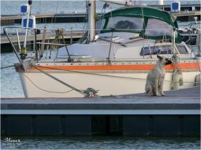 BLOG-P1000324-chien voilier bassins à flot