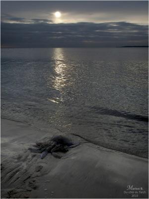 BLOG-PC043891-méduse plage le Moulleau