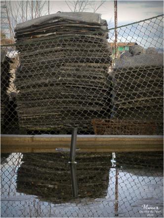 BLOG-P1000712-poches à huîtres