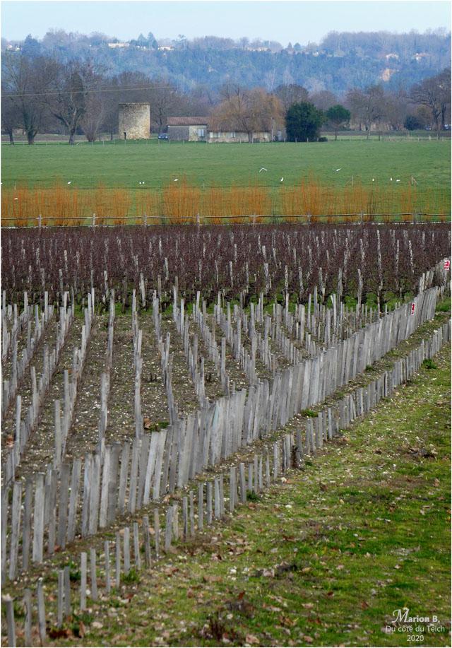 BLOG-P1010186-vigne et moulin Margaux