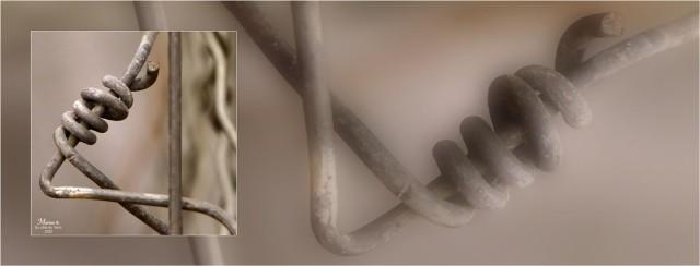 BLOG-P1010348-bannière fil de fer