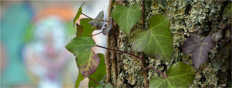 BLOG-P1010528-bannière lierre et tag forêt
