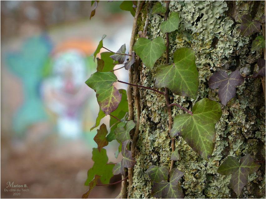 BLOG-P1010528-lierre et tag forêt