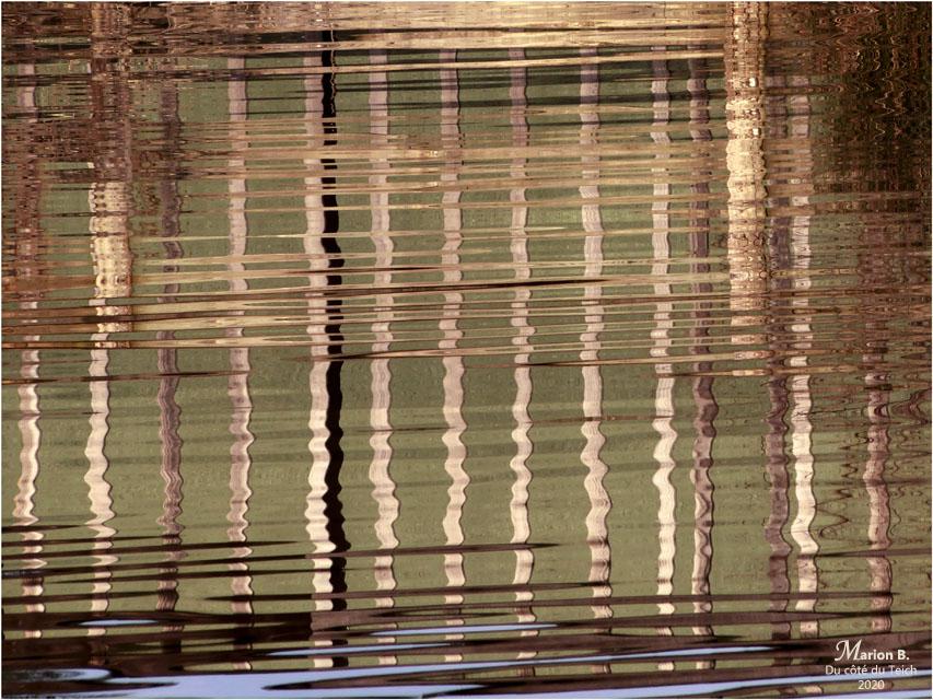 BLOG-P1010557-reflet PO réserve ornitho