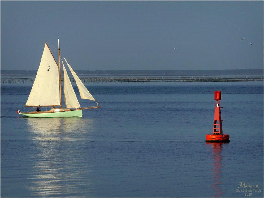 BLOG-P1010659-Sigma Bassin d'Arcachon