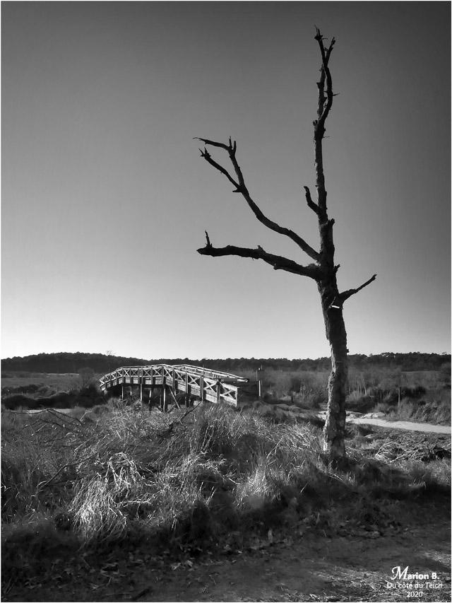 BLOG-P1010701-réserve naturelle Arès N&B