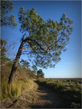 BLOG-P1010717-réserve naturelle Arès
