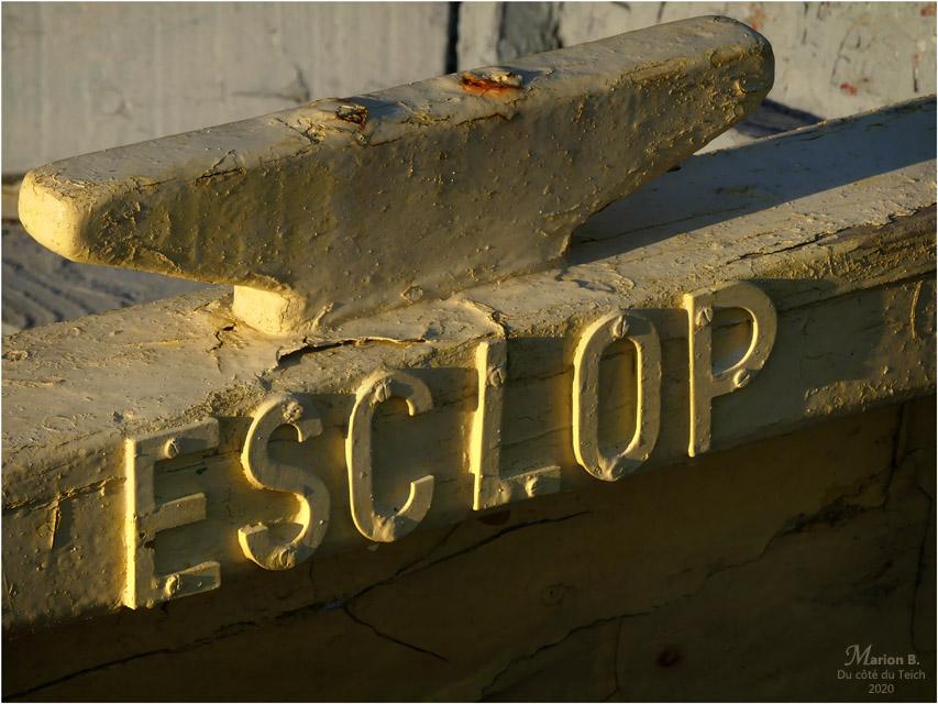 BLOG-P1010743-pinassotte Esclop