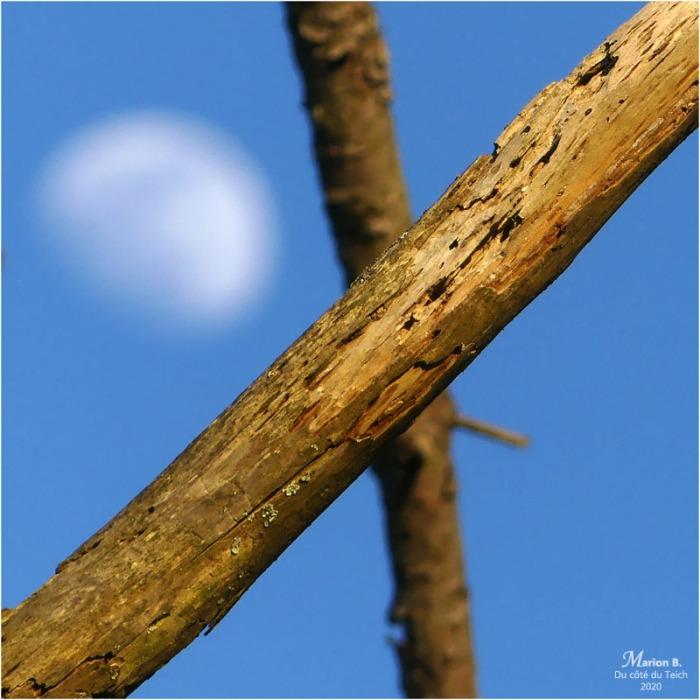 BLOG-P1010754-branches et lune