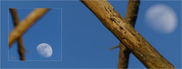 BLOG-P1010756-54-bannière lune et branches