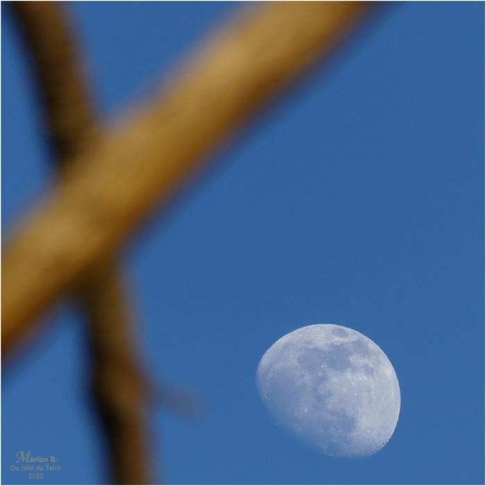 BLOG-P1010756-lune et branches