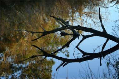 BLOG-P1010761-réserve naturelle Arès