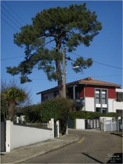 BLOG-P1010997-rue Arcachon