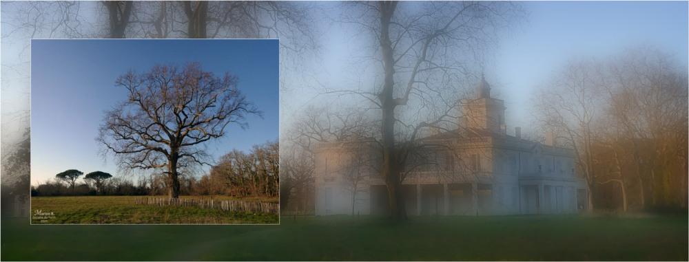 BLOG-P1010286-308-bannière arbres et château Certes