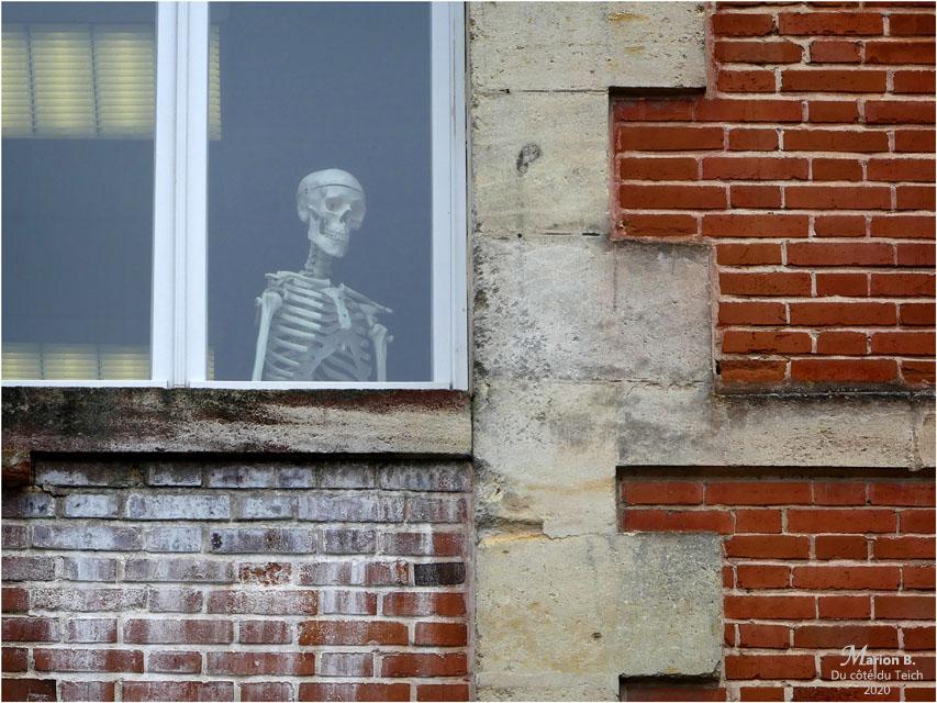 BLOG-P1020784-squelette fenêtre