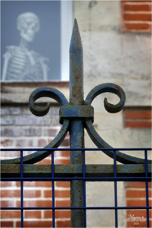 BLOG-P1020786-1-grille et squelette