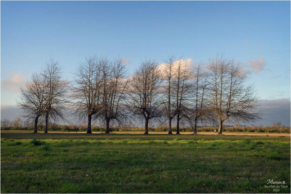 BLOG-P1020814-1-arbres bassin baignade le Teich