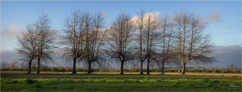 BLOG-P1020814-bannière arbres bassin baignade le Teich