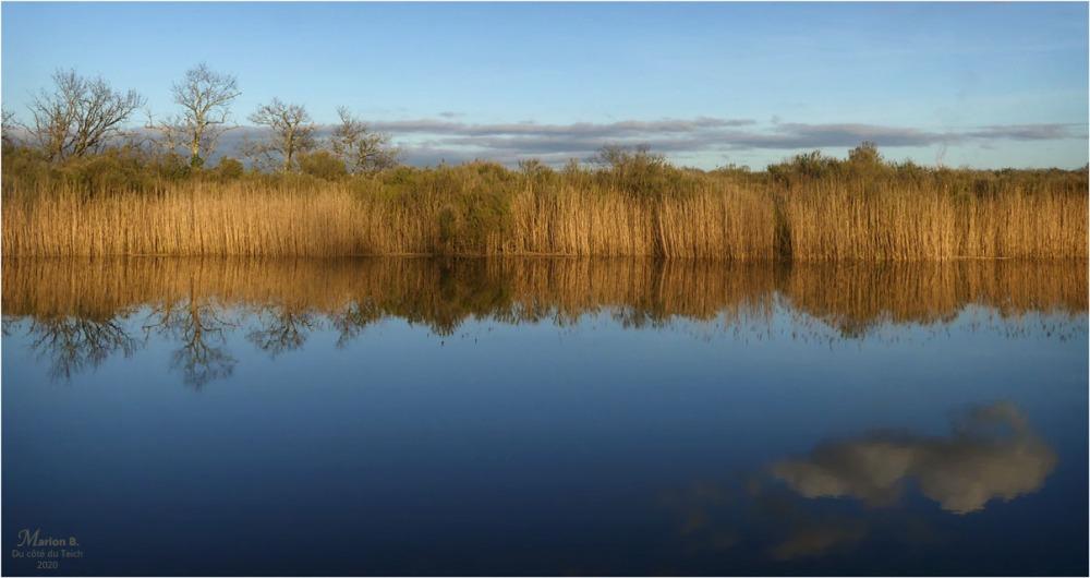 BLOG-P1020820-Eyre le Teich