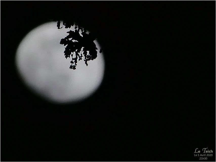 BLOG-P1030139-lune et branche de chêne 5 Avril 2020
