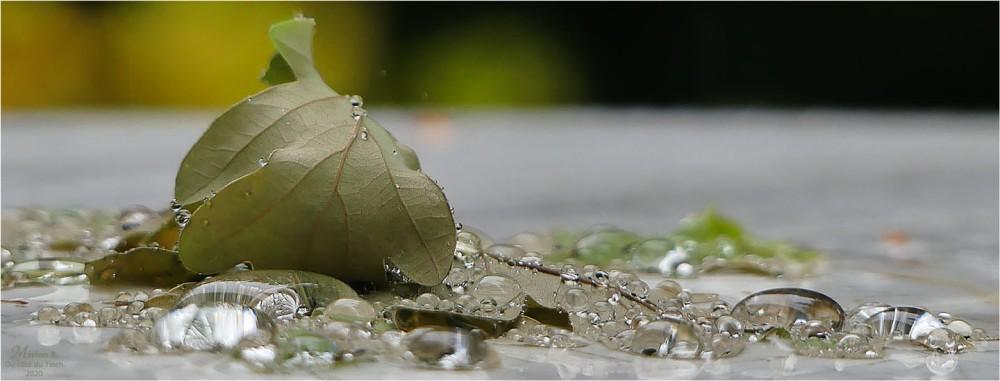BLOG-P1030368-bannière pluie feuilles de chêne