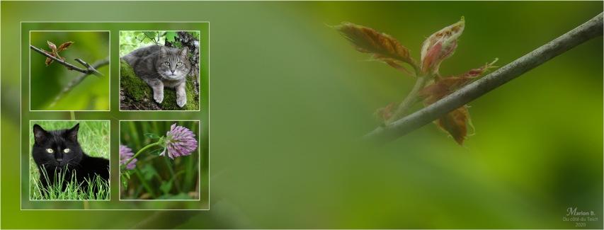 BLOG-P1030404-bannière chats et plantes