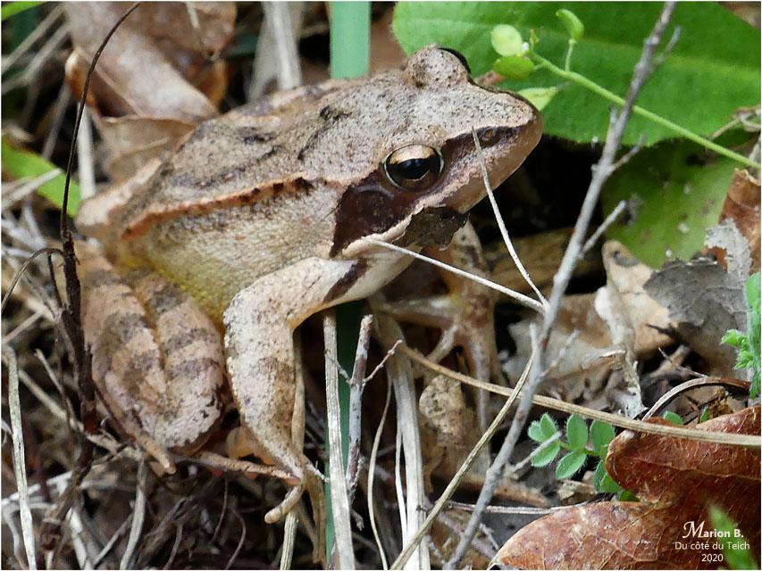 BLOG-P1030420-grenouille