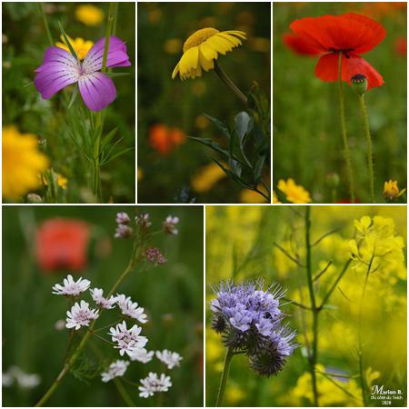 5 vues jardin botanique