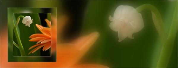 BLOG-DSC_04875-bannière clochette muguet gerbera