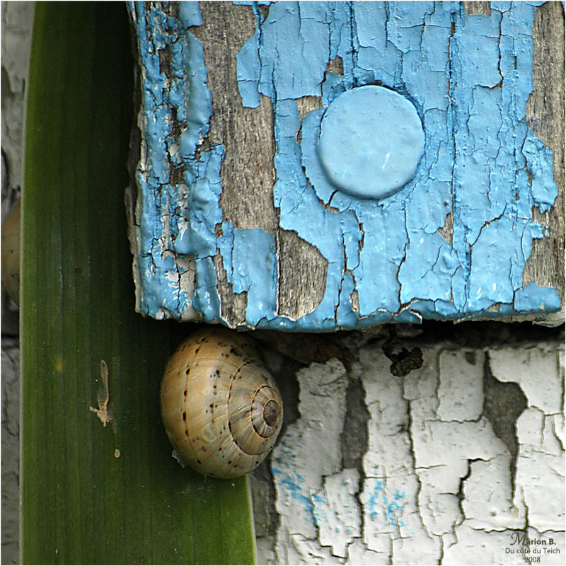 BLOG-DSC_2602-escargot cabane Audenge