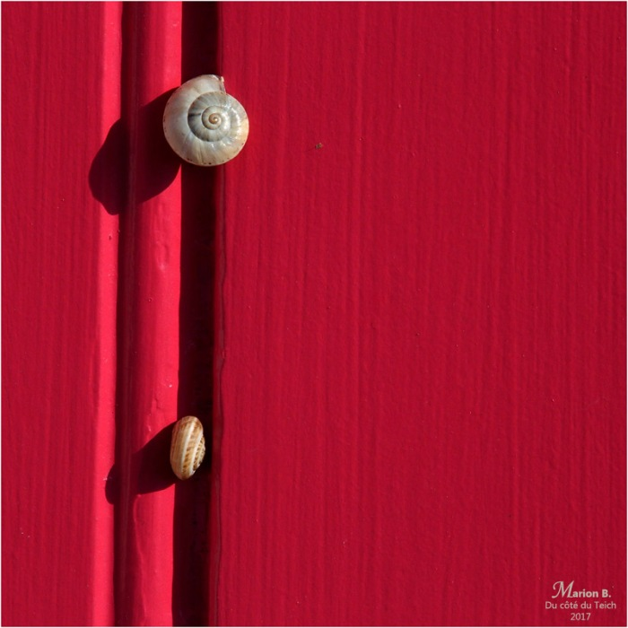 BLOG-P6249876-escargots porte rouge