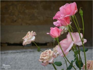BLOG-P1040448-roses château Cazeneuve 33