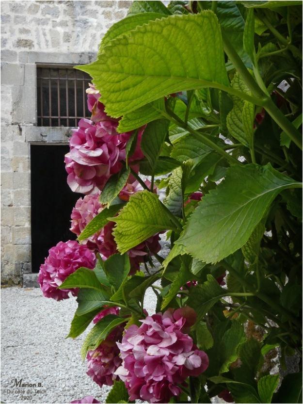 BLOG-P1040456-château Cazeneuve 33
