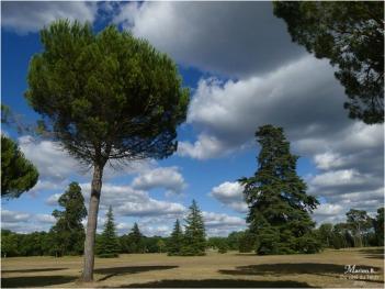 BLOG-P1040492-parc château Cazeneuve 33