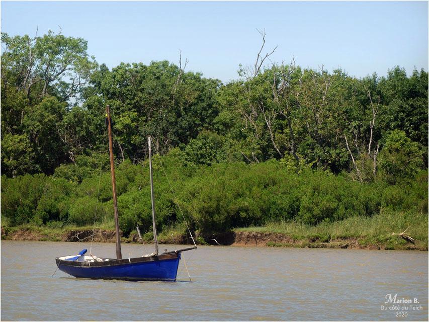 BLOG-P1040708-voilier estuaire Gironde